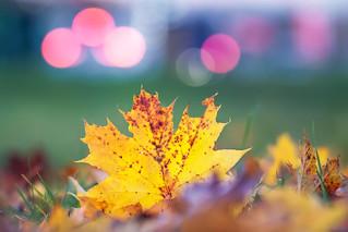 Autumn color explosion!