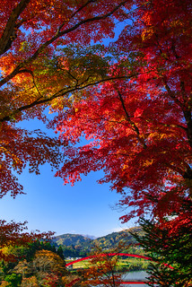Autumn leaves of Aizu #4