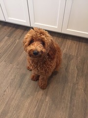 Ruby Red's Rudy has the puppy dog eyes down!