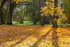 Colorful Autumn Park (AudioClassic) Tags: colors photographythemes photography nopeople autumn colorimage day plant tree lushfoliage season forest woodland landscape nationalpark footpath parkmanmadespace september october branch leaf hiking shade comfortable goldcolored beechtree falling relaxation tranquilscene yellow orangecolor greencolor environment nature outdoors horizontal november estonia
