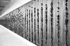 17 (M.D.Rozen) Tags: leica m2 summicron 35mm v3 elmar 90mm f4