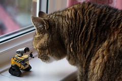 Be Careful Wall-E!! (tanyalinskey) Tags: funny animal pussy cat walle becareful crazytuesdaytheme 7dwf