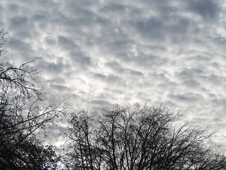 Fluffy Dark Clouds & Stark Trees 2 of 2