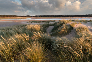The dunes at Holkham, Norfolk