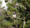 IMG_9126 (ibzsierra) Tags: ave bird oiseau ibiza eibissa baleares canon 7d sañlinas parque natural tamron sp 150600mm f563 di vc usd g2 a022