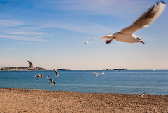 Excitement (Karol ...) Tags: excitement picturesque flight flit seagulls sea seashore seascape