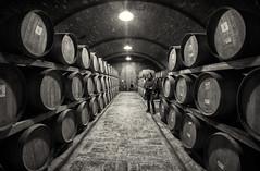 Cantina Umbra (R.o.b.e.r.t.o.) Tags: winehouse cellar winery basement wine umbria pg montefalco italia italy red montefalcosagrantino vinorosso barrique botte bottidilegno rovere