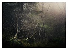 Somewhere in Wales 24 Oct 2017 (Matthew Dartford) Tags: backlight bokeh branch depth fog forest landscape mist misty tangled tree trees trunk twigs twisted woodland woods