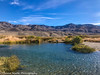Owens Valley-47 (Denise Noelle Photography) Tags: owensriver bishopca sierranevadamountains monolake lonepine junelake mammothlakes