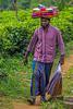 Sheet Sailesman, Rothschild Tea Estate, Sri Lanka (bfryxell) Tags: beard pussellawa rothschildteaestate sheetsalesman srilanka teaplant teaplantation vendor