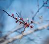 in midair (YellowTipTruck) Tags: inflorescence burgeon nature herb spring flight blossom springtime wasp prime midair