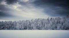 White forest (JH') Tags: winter trees tree photoshoot photography sky sweden sigma snow d750 december field forest landscape lake free clouds colors beautiful blue nikon nature naturephotograph outdoors outdoor