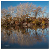 (etzel_noble) Tags: belleisle autumn michiganautumn canonphotography canon1740mm canon6d trees nature water reflections