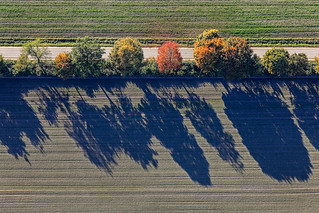 Colored Tree Row