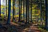Colorful trail (++sepp++) Tags: deutschland germany bavaria bayern bayerischerwald bavarianforest landschaft landscape landschaftsfotografie frauenau de herbst fall autumn october oktober gegenlicht backlight backlit bäume trees wald forest trail wanderweg pfad fusweg laub foliage bunt colorful