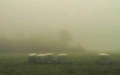 On the Fields (Netsrak) Tags: baum bäume eifel europa europe herbst landschaft natur nebel wald autumn fall fog landscape mist nature woods