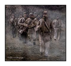 Coming Through the Cornfield (The Battle of Antietam Creek) (windshadow2) Tags: civilwar newport reenactment reenactor antietam sharpspsburg md americaan civil war cornfield 1862 september confederates