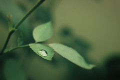 Droplet (Rishabh_Sharma_In) Tags: concept water reflection nature urban tree abstract bokeh beautiful leaf natural life moment green dof canon blur earth photoshop lightroom eos smooth best planet depth stillness adobe noob india 1200d skills art