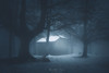 Casa misteriosa (Mimadeo) Tags: house forest mysterious snow snowy winter cold mystery dark fog night lost mood monochrome landscape tree shadow light evening nature mist spooky foggy darkness misty woods atmosphere moonlight moody toned atmospheric urkiola