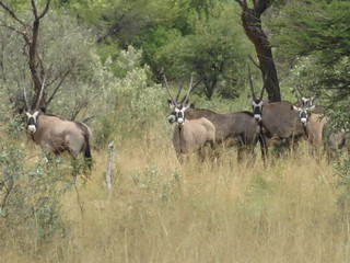 Namibia Hunting Safari 24