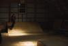 jesse. (Dakota Olsen) Tags: analog 35mm film canon ae1 50mm f14 horizontal landscape portrait warm fine happy color grain nature girl beautiful cute adorable lovely gorgeous natural candid moment thee perfect time funny trees woman san francisco california maryland always wising was melbourne australia old vintage classic aged dreamy lucid memory memories nostalgic nostalgia black white bw sepia tone mamiya c330 medium format nikon fg digital d700 skate skateboard water beach sand dakota olsen