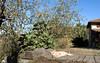 Brad Pitt + Apple Tree + Fig Tree + Laziness (Xena*best friend*) Tags: bradpitt bp appletree figtree bluesky lazycats cats whiskers feline katzen gatto gato chats furry fur pussycat feral tiger pets kittens kitty piedmontitaly piemonte canoneos760d italy wood woods wildanimals wild paws animals calico markings ©allrightsreserved purr digitalrebelt6s efs18135mm flickr outdoor animal pet autumn iloveautumn autumncolours laziness doingnothing