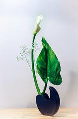 The Sword, The Moon, The Cloud (Gingertail) Tags: hirosige keiseiikebanaclass sogetsu anemone arrangement associations autumn calla class dance flowers ikebana inspiration iris painting