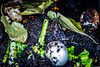 20171112-DSC_6554 (CCMPhoto) Tags: flickrfriday gogreen compost