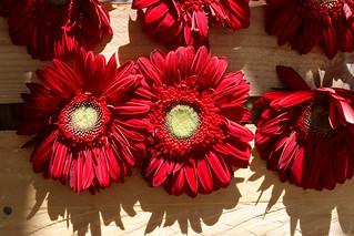 Temps de flors_0106