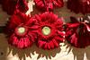 Temps de flors_0106 (Joanbrebo) Tags: girona catalunya españa es tempsdeflors tempsdeflors2017 flors flores flowers fleur fiori blumen blossom canoneos80d eosd efs1018mmf4556isstm autofocus