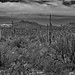 A Far Off Look To Silver Bell Peak and a Few Other Peaks of the Sonoran Desert Ranges (Black & White, Saguaro National Park)