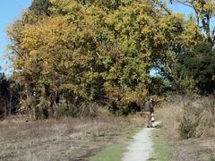 Photographer_5082b (JKehoe_Photos) Tags: ulistacnaturalarea unarep photographer wildlife tree park trail grassland outdoors santaclaracounty johnjkehoephotography