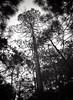 Los Pinos, Sierra Madre, Durango (John S Skeet) Tags: ga645zi ilford fujifilm mexico sierramadre film hp5 6x45 durango