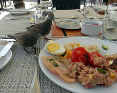 all inclusive (kexi) Tags: mauritius ilemaurice africa food meal lunch restaurant two 2 pair couple birds funny allinclusive samsung wb690 october 2016 hungry instantfave