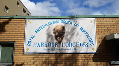 Royal Antediluvian Order of Buffaloes (Fred:) Tags: royal antediluvian order buffaloes harbour lodge buffaloclub dartmouth novascotia buffalo club halifax sign affiche enseigne bison head animal harbor hrm nova scotia community fraternal confrérie organization organisation charitable charity social communauté