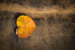 Simplicity (Pierre de Champs) Tags: leaf beach sand guadeloupe caribbean tropical fwi nikon nikonphotography simple d750