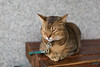 Cat (迷惘的人生) Tags: 臺北市 台北市 台灣 tw canon 5d3 50mm cat 貓 大湖公園