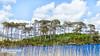 L'Île aux pins (paspeya007) Tags: irlande ireland connemara clifden ileauxpins pine islande derryclare europe europa ie pineisland