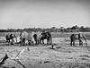 Okowango Delta (hugoholunder) Tags: elefant flickr herde