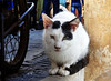Fez, Morocco - Nov 2017 (Keith.William.Rapley) Tags: fez fes morocco rapley keithwilliamrapley 2017 nov november africa fezmedina oldtown cat medina feselbali