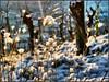 into the sun (almresi1) Tags: weinberg vineyard wood holz snow schnee winter sun sonne gräser nature landscape macro fellbach