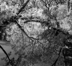 Axe Creek (Matt OZW) Tags: axecreek landscape infrared monochrome blackwhite