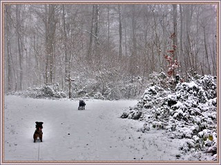 Il neige / It's snowing