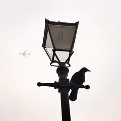 Urban birds (Daniel James Greenwood) Tags: nokialumia mobilephonephotos danielgreenwood danielgreenwoodphotography