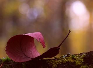 November's leaf
