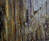 Swinging Tilberthwaite º (CactusD) Tags: tilberthwaite england cumbria slate movements swing slatequarry lakedistrict rock lichens greatbritain great britain nikon d800e fx texture uk unitedkingdom gb landscape detail film 5x4 4x5 details fuji fujichrome velvia velvia50 largeformat large format digitized linhof technikardan tks45 s45 nikkorw210mmf56 210mm f56 tilt shift tiltshift pce 85mmf28pce 85pce 85mm f28
