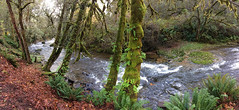 Fall Creek (Fish as art) Tags: davidnoakes oregonsalmon osu chinooksalmon landscape fallcreek alsea oregon paulvecseiphotography pacificnorthwest pacificcoast