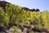 Fall Trees Below the Rim (isaac.borrego) Tags: canyon desert coyotegulch glencanyon nationalrecreationarea escalante utah canonrebelt4i