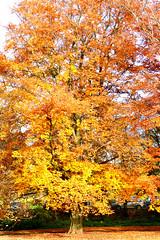P1270732 (steve p2008) Tags: burtonupontrent autumn november2017 woodland trees