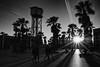 palm trees (Alexander.Hüls) Tags: city barcelona sunset barceloneta peaople palmtrees btackandwhite bw lowkey shadows